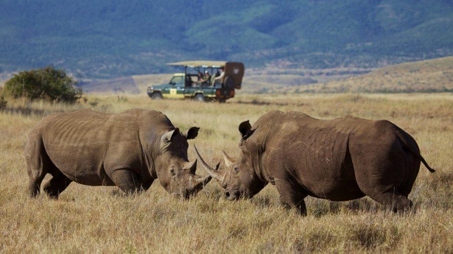 Luxury safari in Laikipia