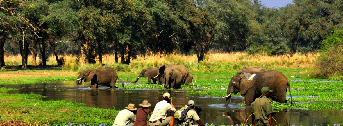 Perfect for a first safari- old Mondoro in Zambia's Lower Zambezi