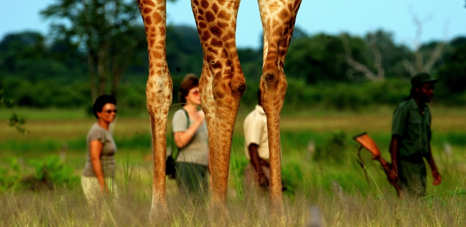 Walking safari in Zambia with the Bushcamp Company