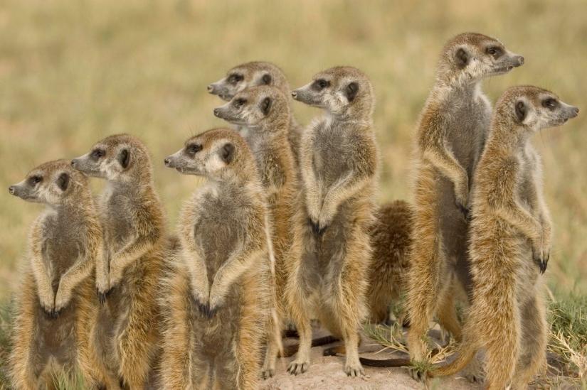 Luxury safari in the Makgadikgadi Pans