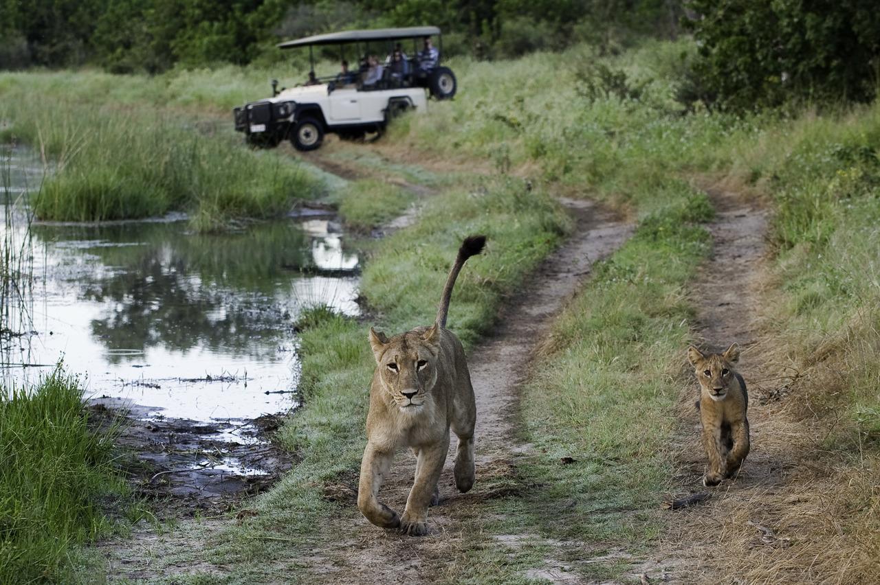 Luxury Safari in Botswana