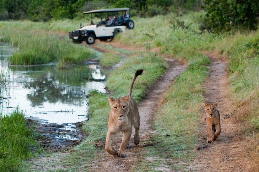Luxury safari in Kwando, Linyanti, and Selinda