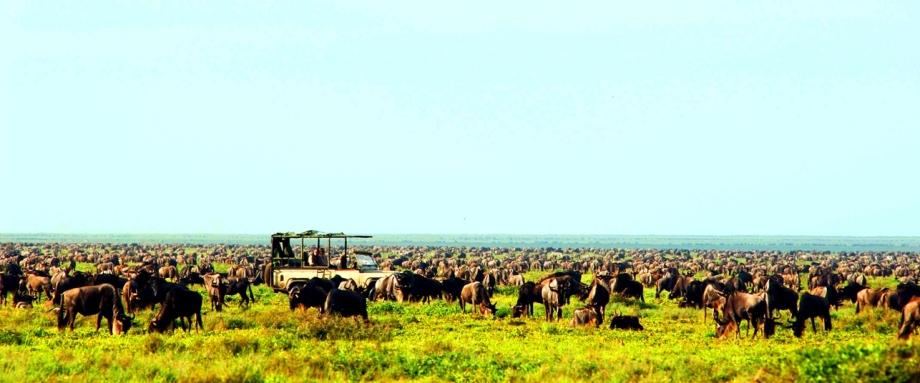 Wildebeest Migration with Serengeti Safari Camp