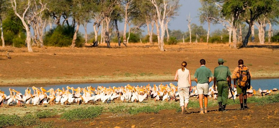 South Luangwa Walking Safari with Robin Pope Safaris