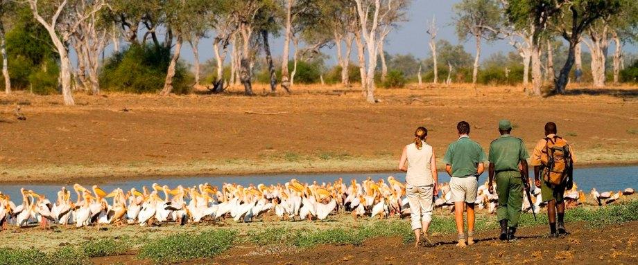 South Luangwa Walking Safari with Robin Pope Safaris