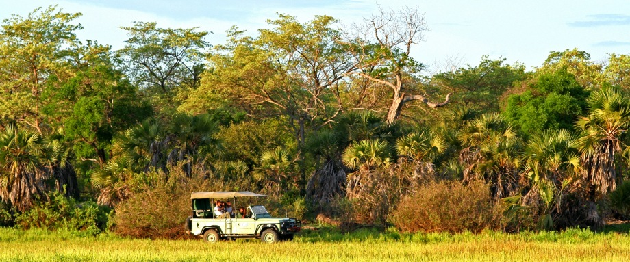 Game drive on safari