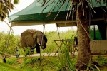 Southern Tanzania Safari and beach honeymoon