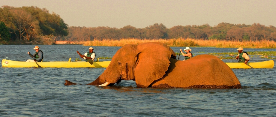 Boat safari in the Lower Zambezi