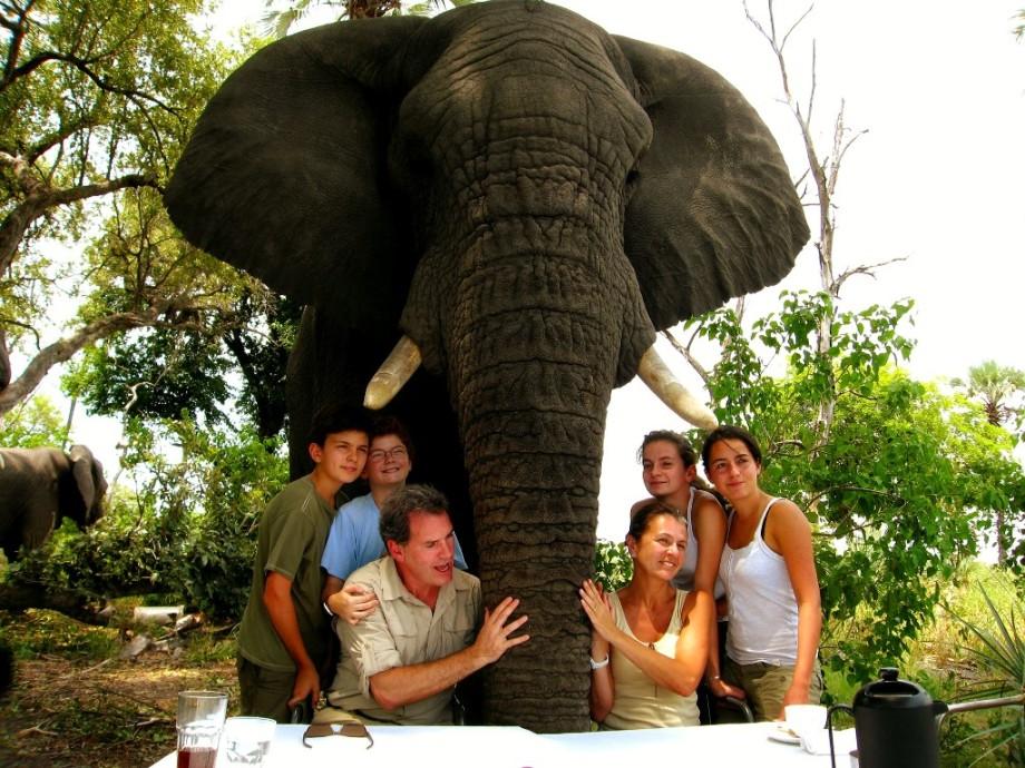 Walking with Elephants on a luxury safari in Botswana