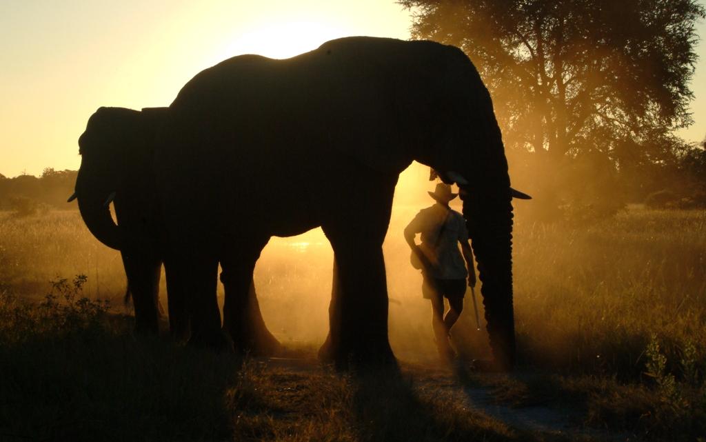 Walking Safari with Elephants, Okavango Delta, Botswana
