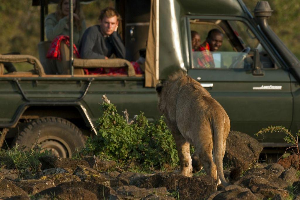 Game drive in the Masai Mara