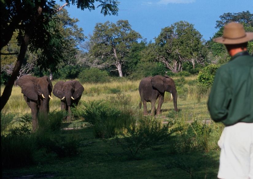 Watching elephants on a walking safari from Sand Rivers Selous