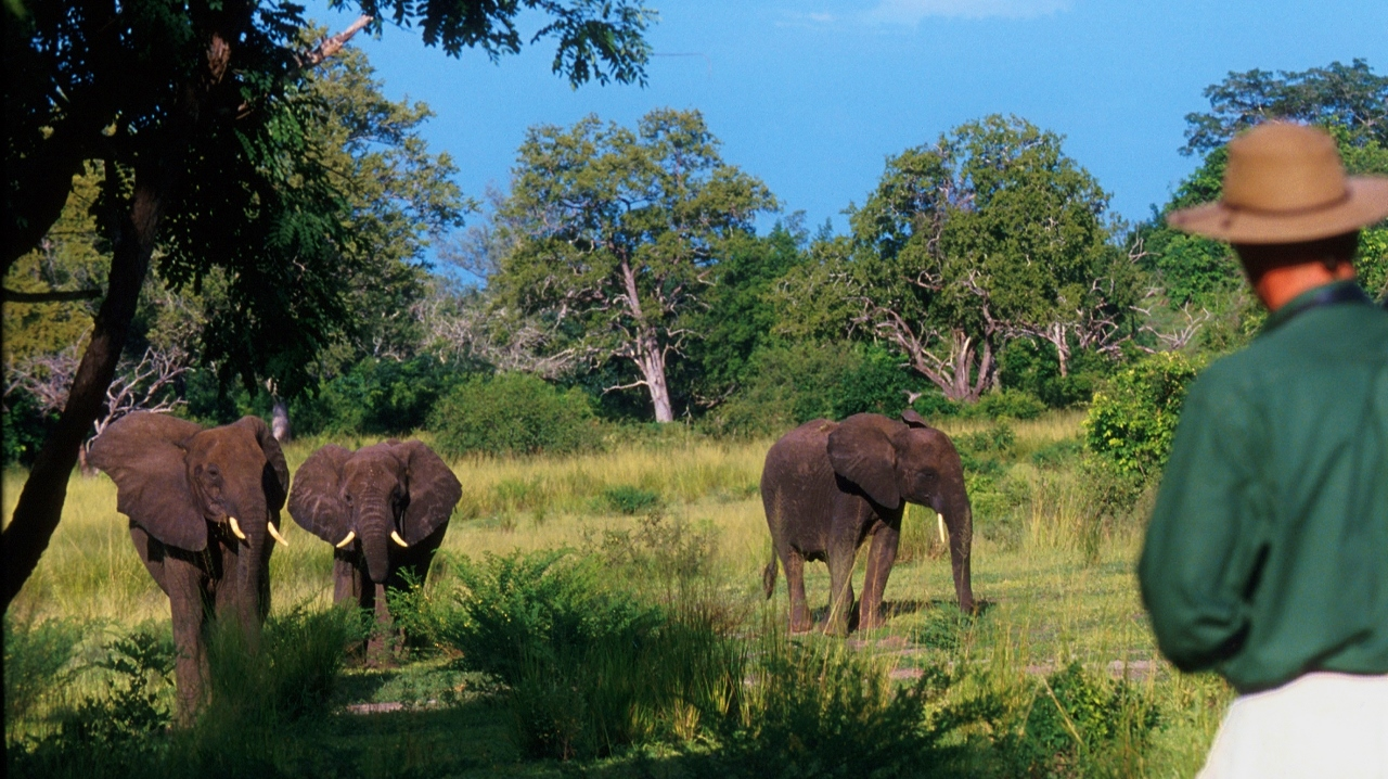 Walking Safari in the Selous