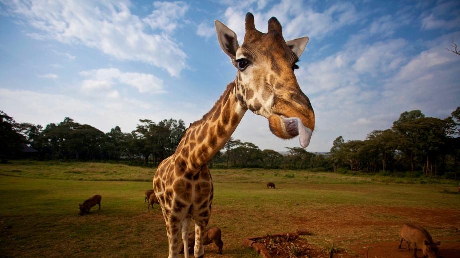 Giraffe Manor at Nairobi Giraffe Sanctuary