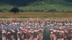 Luxury safari in the Ngorongoro Crater