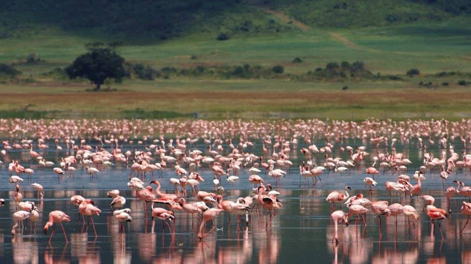 Luxury safari in the Ngorongoro Crater