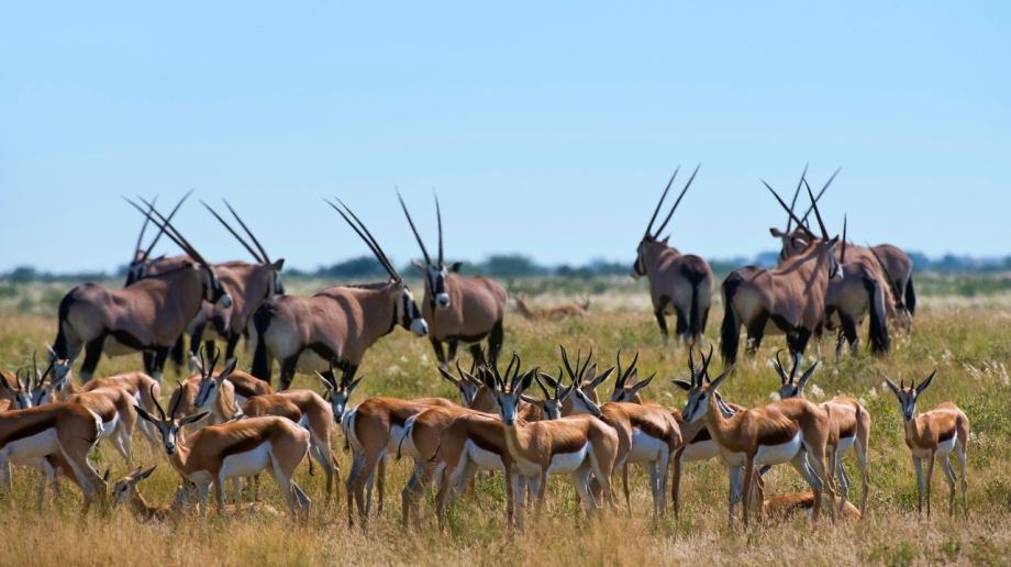 Luxury safari in the Central Kalahari