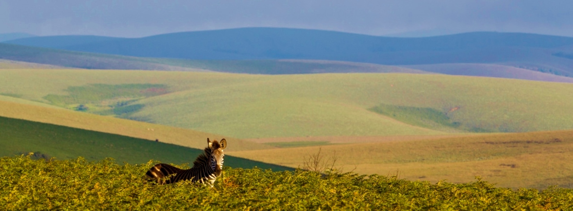 Safari on the Nyika Plateau