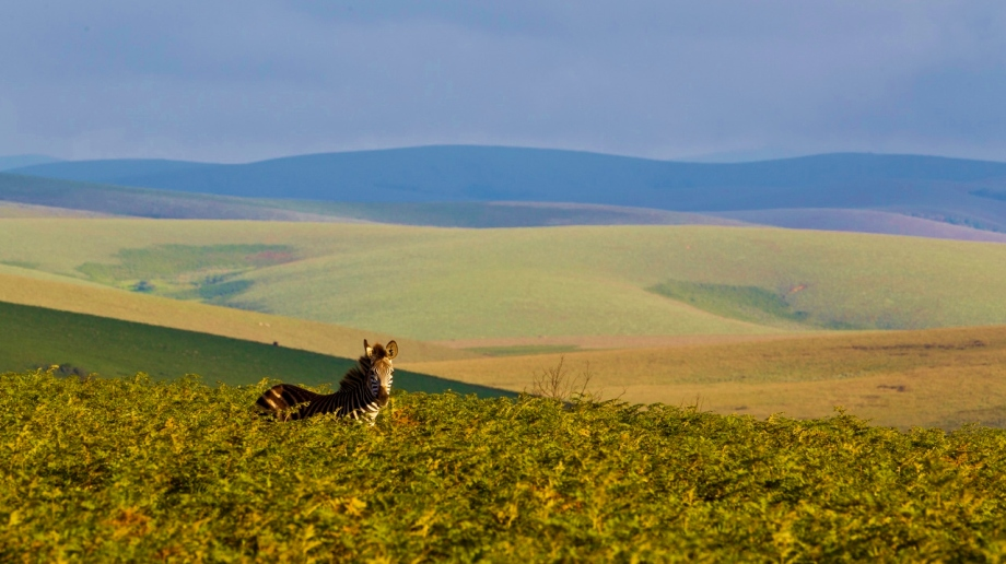Safari on the Nyika Plateau