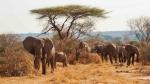 Luxury safari in the Ruaha