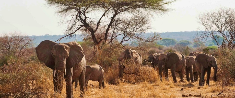 Luxury safari in the Ruaha