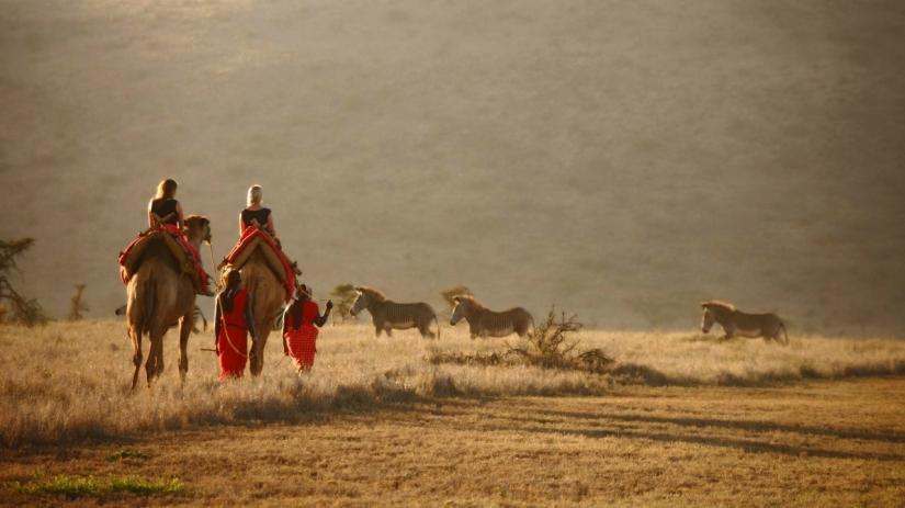 Luxury camel safari in Lewa, Laikipia