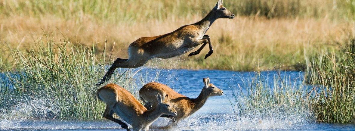 Luxury Safari in Linyanti, Botswana