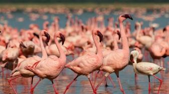 Safari at Lake Nakuru National Park