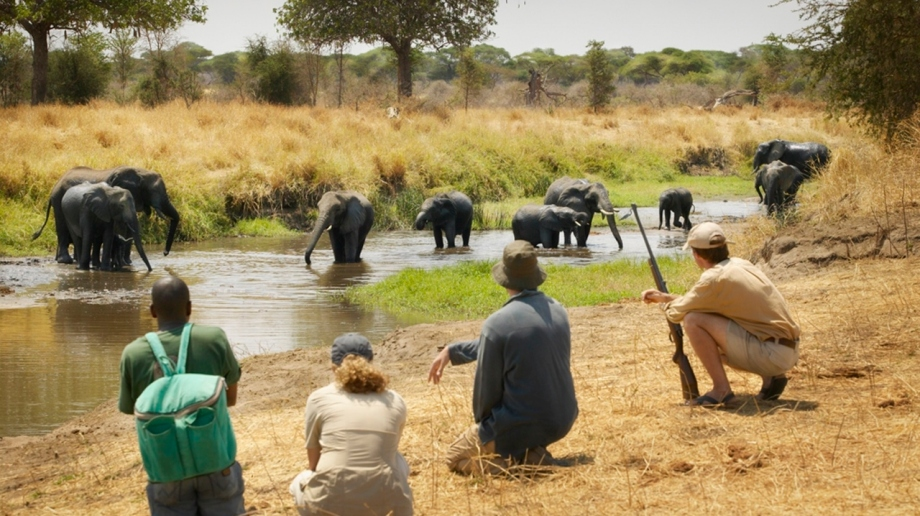 Luxury Safari in Tarangire National Park