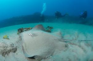 Diving at Rocktail Bay