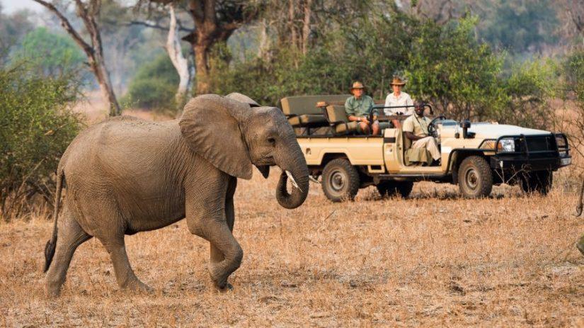 Luxury safari in the South Luangwa, Zambia
