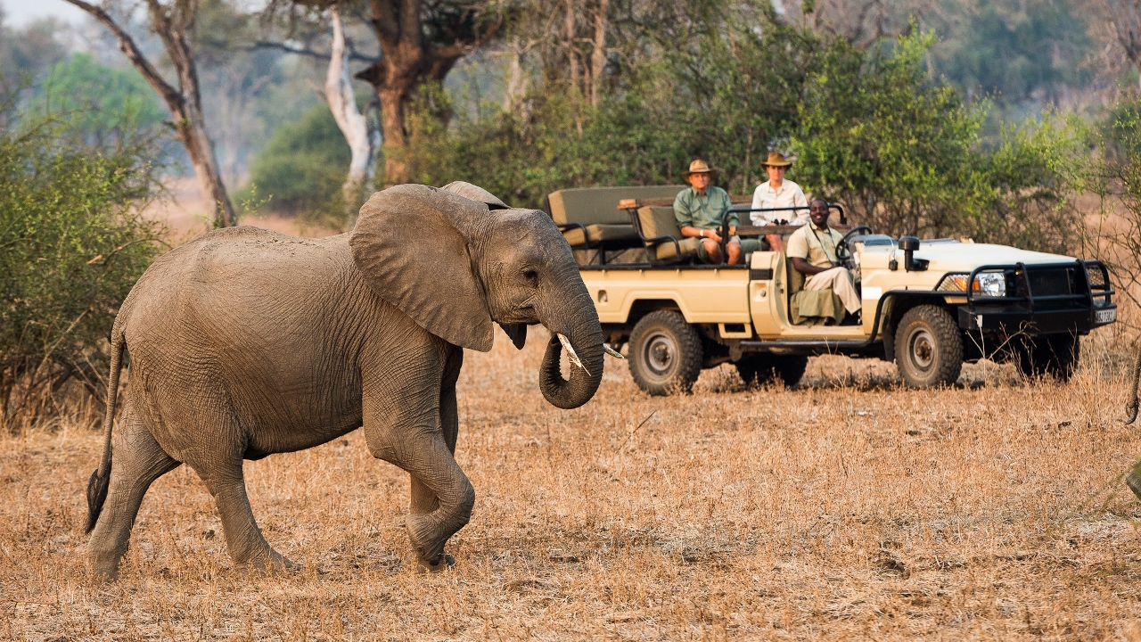 Luxury Safari in the South Luangwa