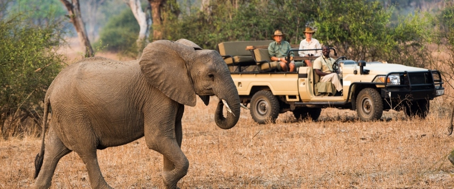 Luxury safari in the South Luangwa, Zambia