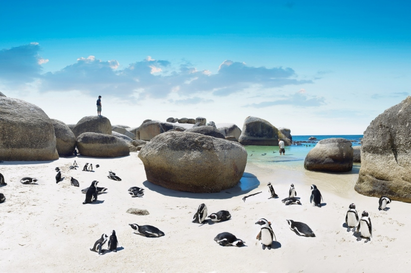 Excursion from Cape Town to Boulders Beach