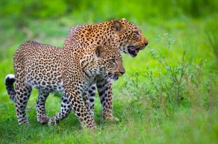 Green season safari