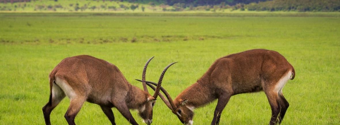 Safari at Akagera