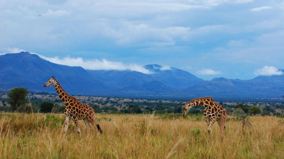 Safari in Kidepo