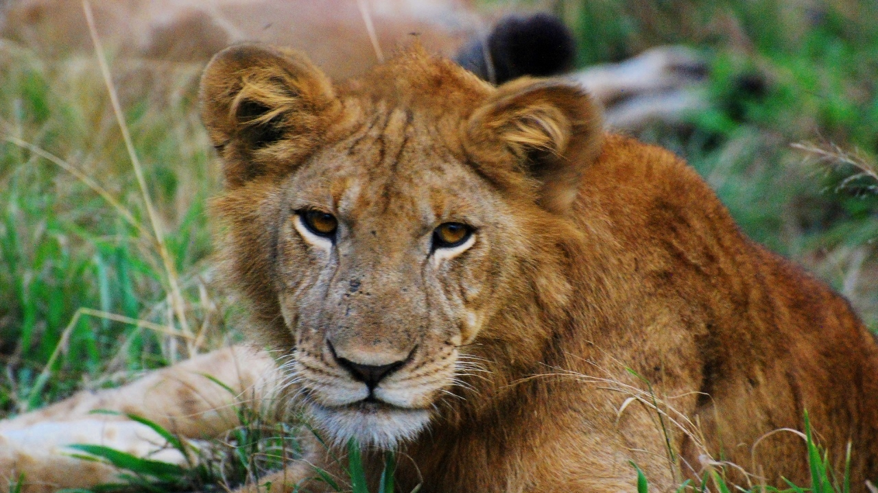 Safari in Queen Elizabeth National Park