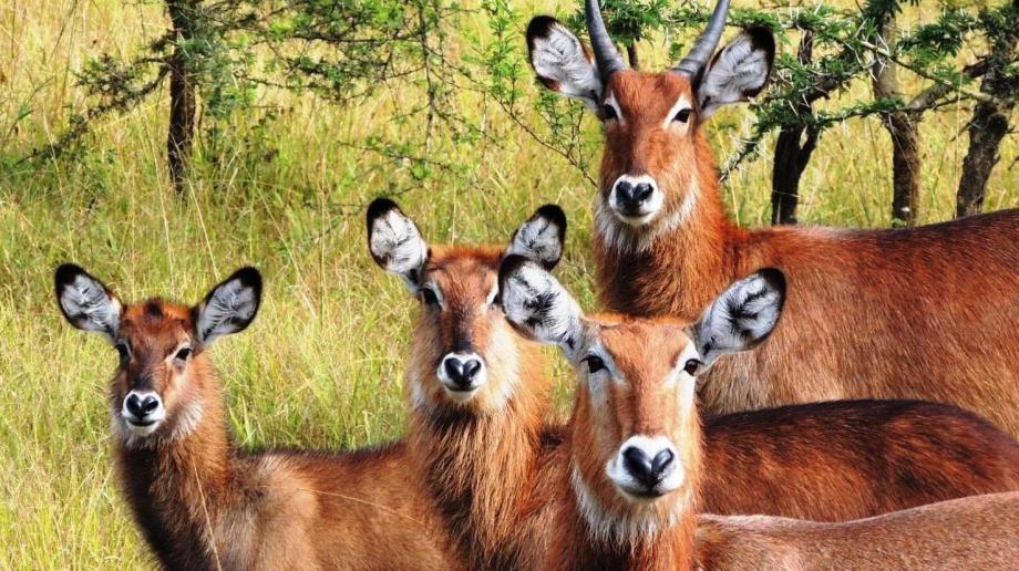 Safari at Lake Mburo National Park