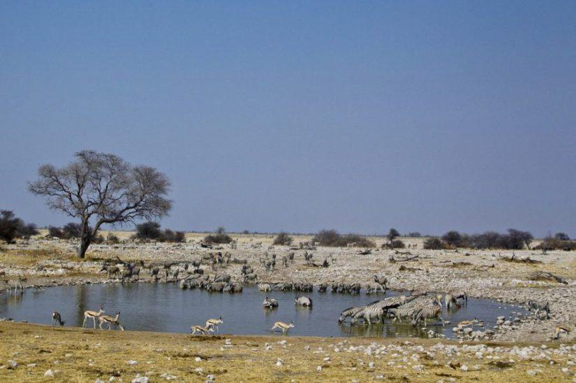 Luxury Safari in Etosha