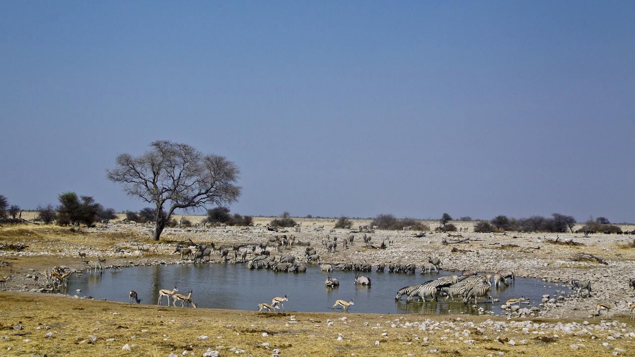 Safari in Etosha