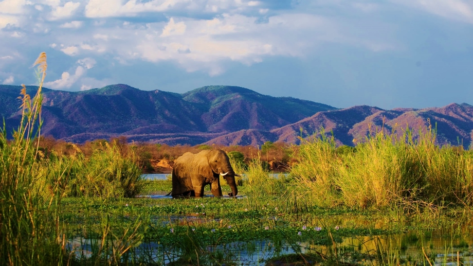 Safari in the Lower Zambezi