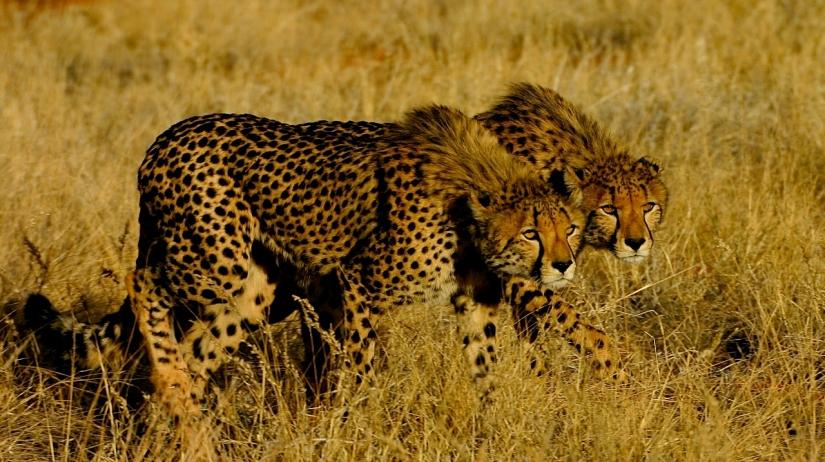 Luxury Safari in Madikwe and Kalahari