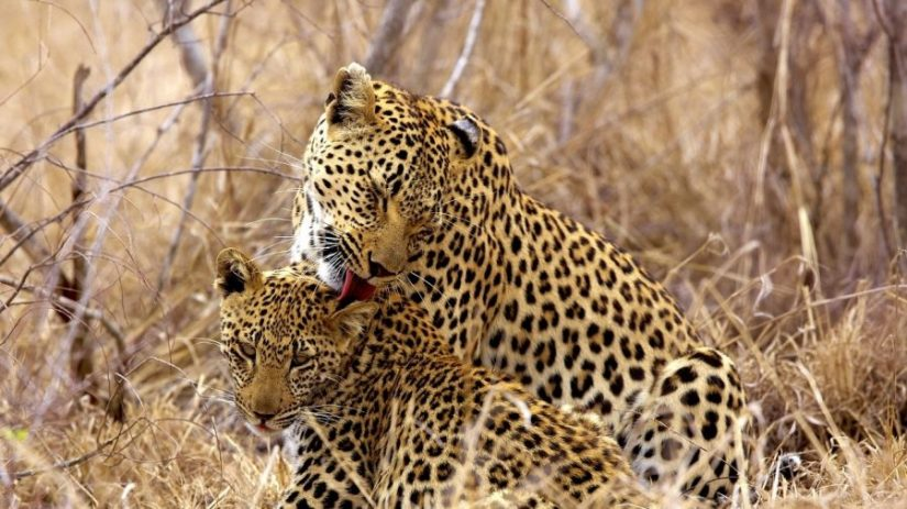 Luxury safari in the Sabi Sands and Kruger