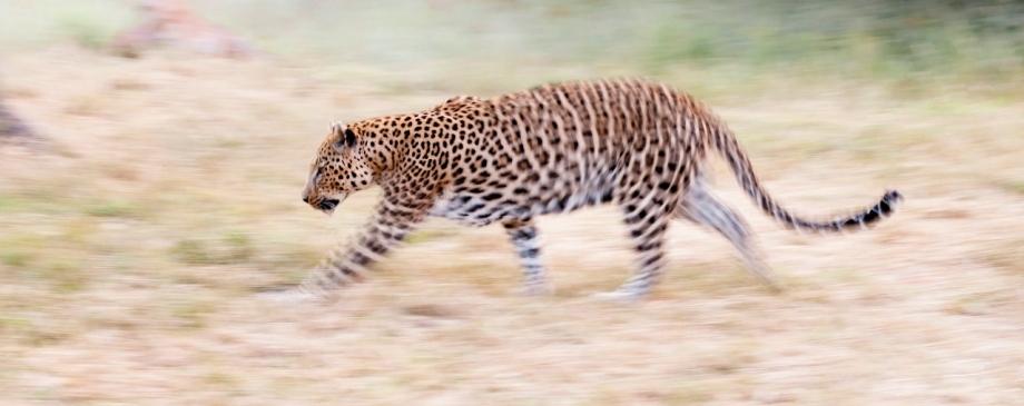 Okonjima Safari