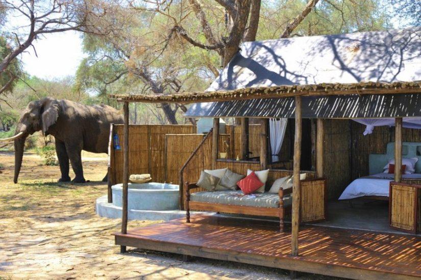 Safari at Old Mondoro Lower Zambezi