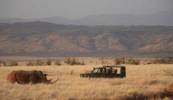Safari at Lewa Safari Camp