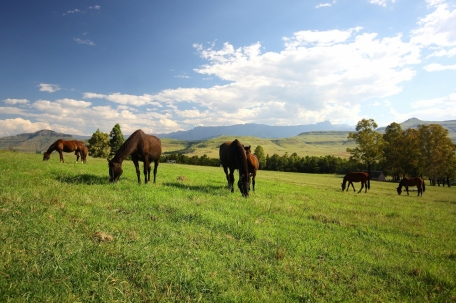Horses at Montusi Mountain Lodge