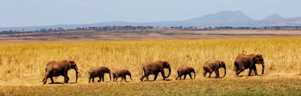 Safari from Kuro in Tarangire National Park