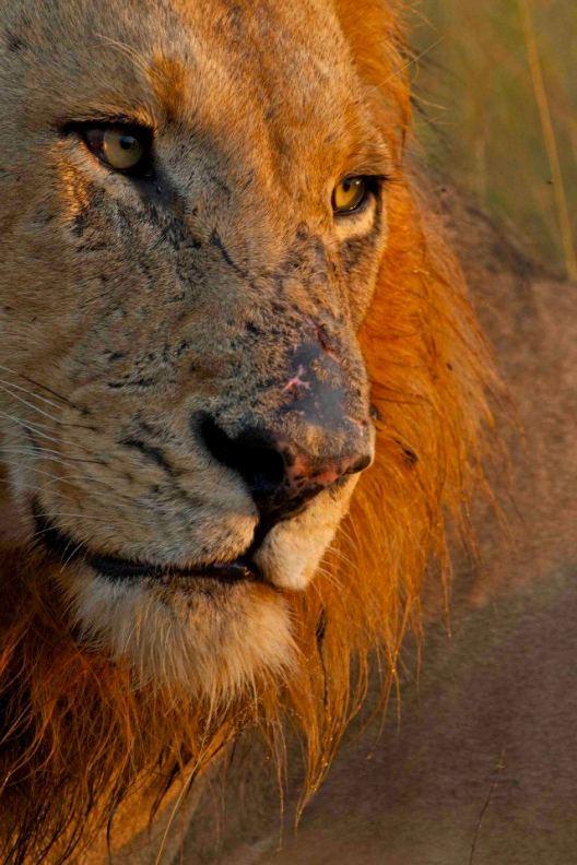 Safari at Chitwa Chitwa